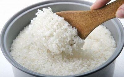 Manfaat MOL dari Nasi Basi, Alternatif Pupuk Organik Untuk Menyuburkan Tanaman